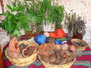 Natural dye plants used in Guatemala